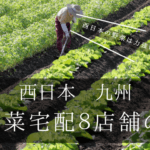 西日本 九州 関西野菜宅配8店舗のおすすめ