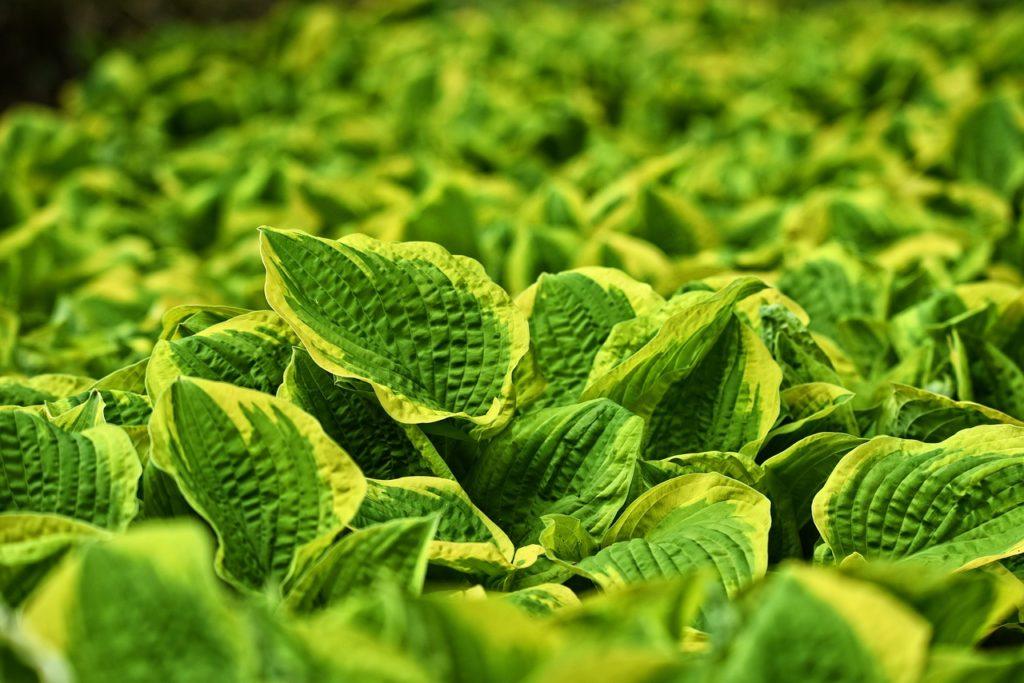 虫食いから野菜を守る農薬