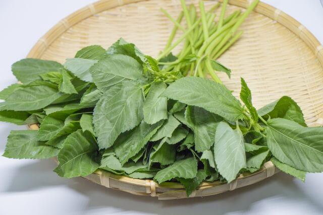 栄養の王様野菜、モロヘイヤ