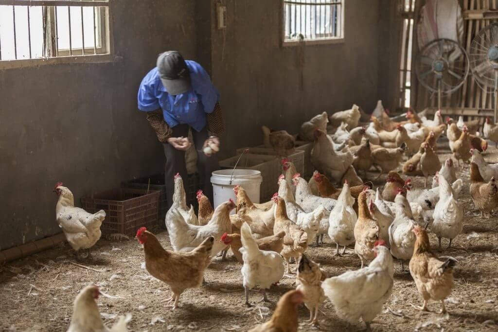 らでぃっしゅぼーやの畜産品は安心安全