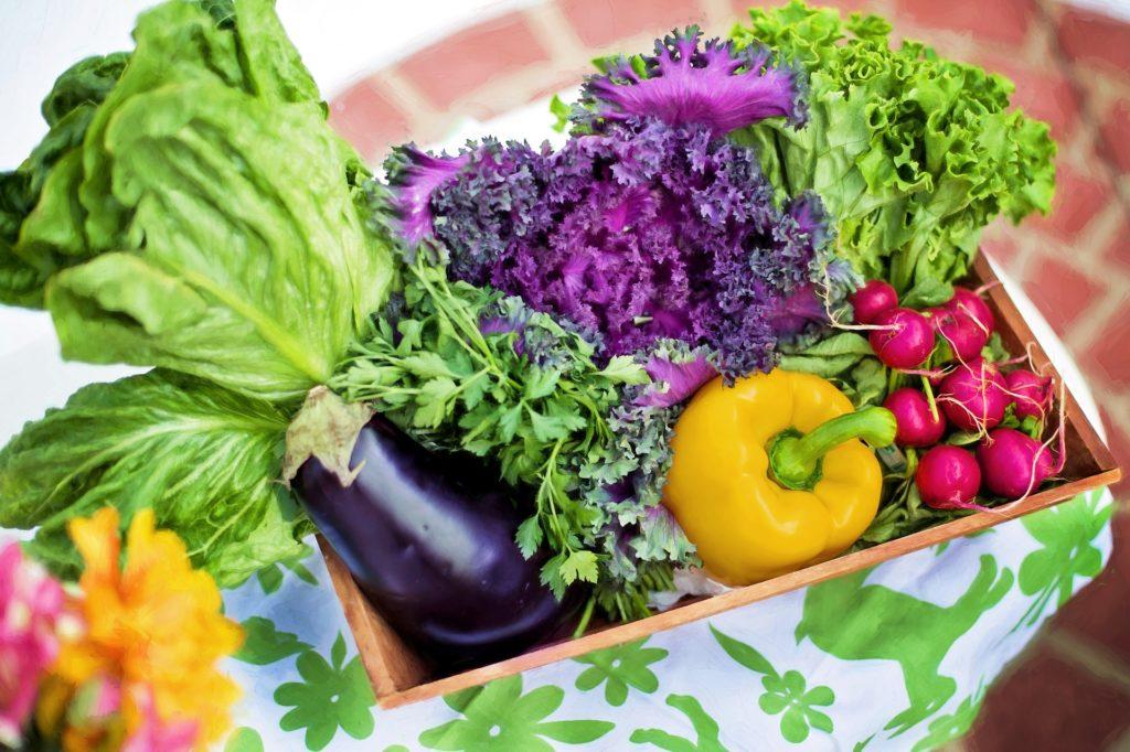 野菜宅配サービス各社のお試しセット比較