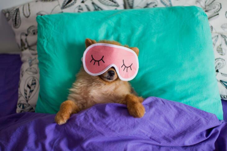 ケールには快眠効果が期待できる!